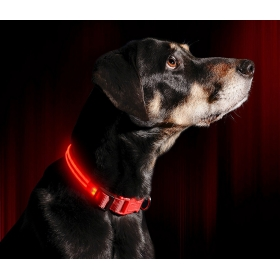 Pet Glow In Dark Led Collar Night Safety Collar - Medium (1 Battery Included)