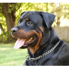 Dog Choke Chain 3.0mm X 50cm