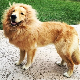 Lion Mane Costume Brown Large For Dogs